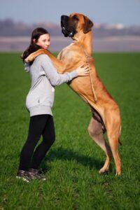 stor_hund
