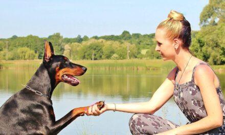 Har du en stor hund? – sådan tager du den med på ferien