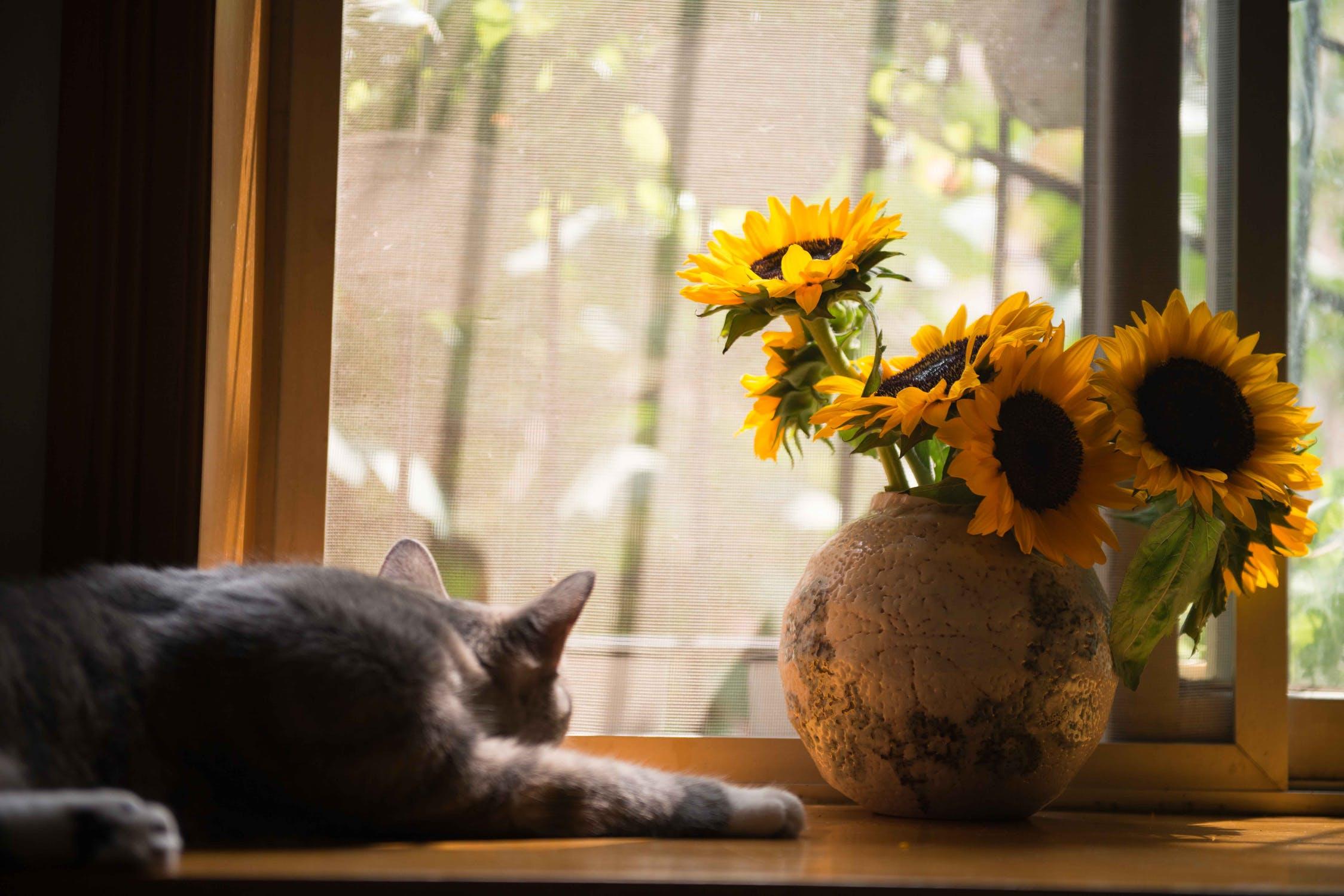 kat-vindue-blomster
