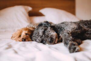 hund i seng
