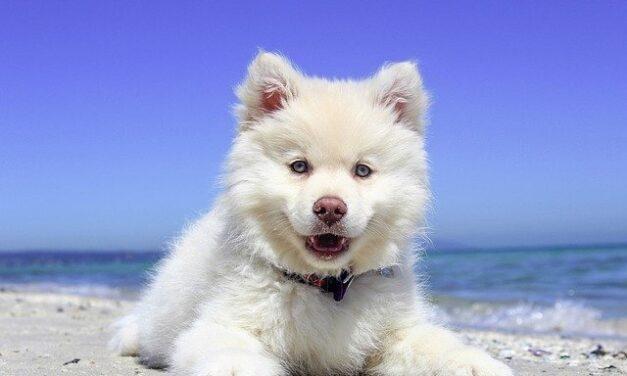 Tag dit kæledyr med på ferie